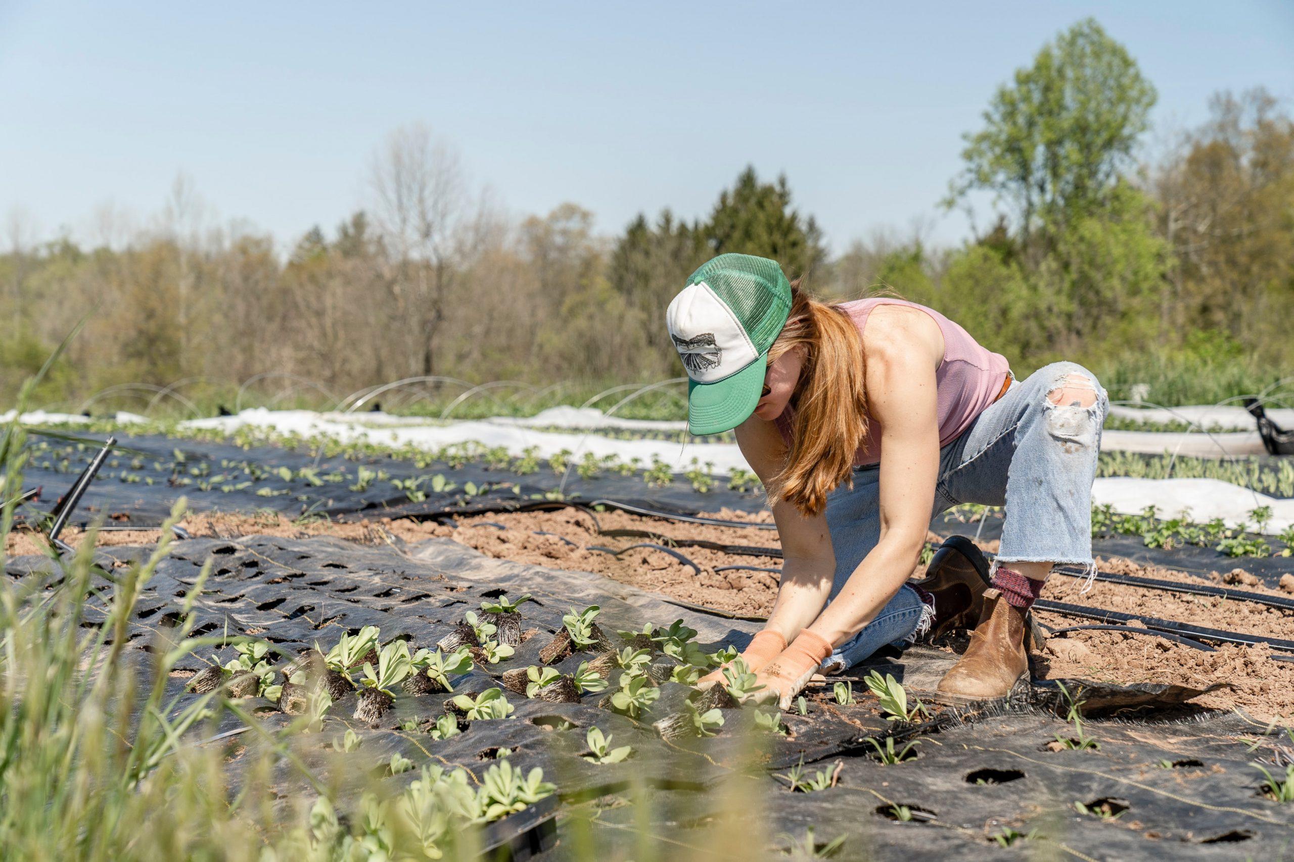 Frau pflanzt Grünpflanze